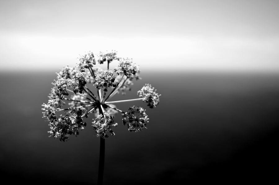 Flower - Eivissa