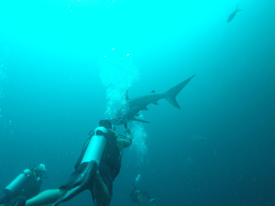 Reef Sharks in the Blue Hole - Belize